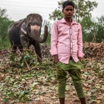 New Delhi: India: 2014  A boy who works with the Mahouts poses in front of an elephant. As less and less elephants have been allowed into Delhi, Mahouts have had to diversify to animals such as camels and horses.