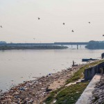 New Delhi: India: 2014  Two elephants emerge from the polluted Yamuna River after their daily bathing routine. Under overpasses and next bridges along the bank are some of the last havens for the elephants in Delhi.