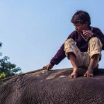 New Delhi: India: 2014  Sahil, 12, sits atop his favourite elephant  . Sahil's father was a Mahout but died after an accident whilst riding an elephant.