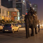 New Delhi: India: 2014  Devcharan, 33, makes the 14 mile journey to a wedding the elephant is booked for in Delhi. Due to traffic and the progression of the elephant, it can take upwards of 4 hours one way to travel to any particular location in Delhi